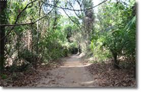 Classified forest of Kou