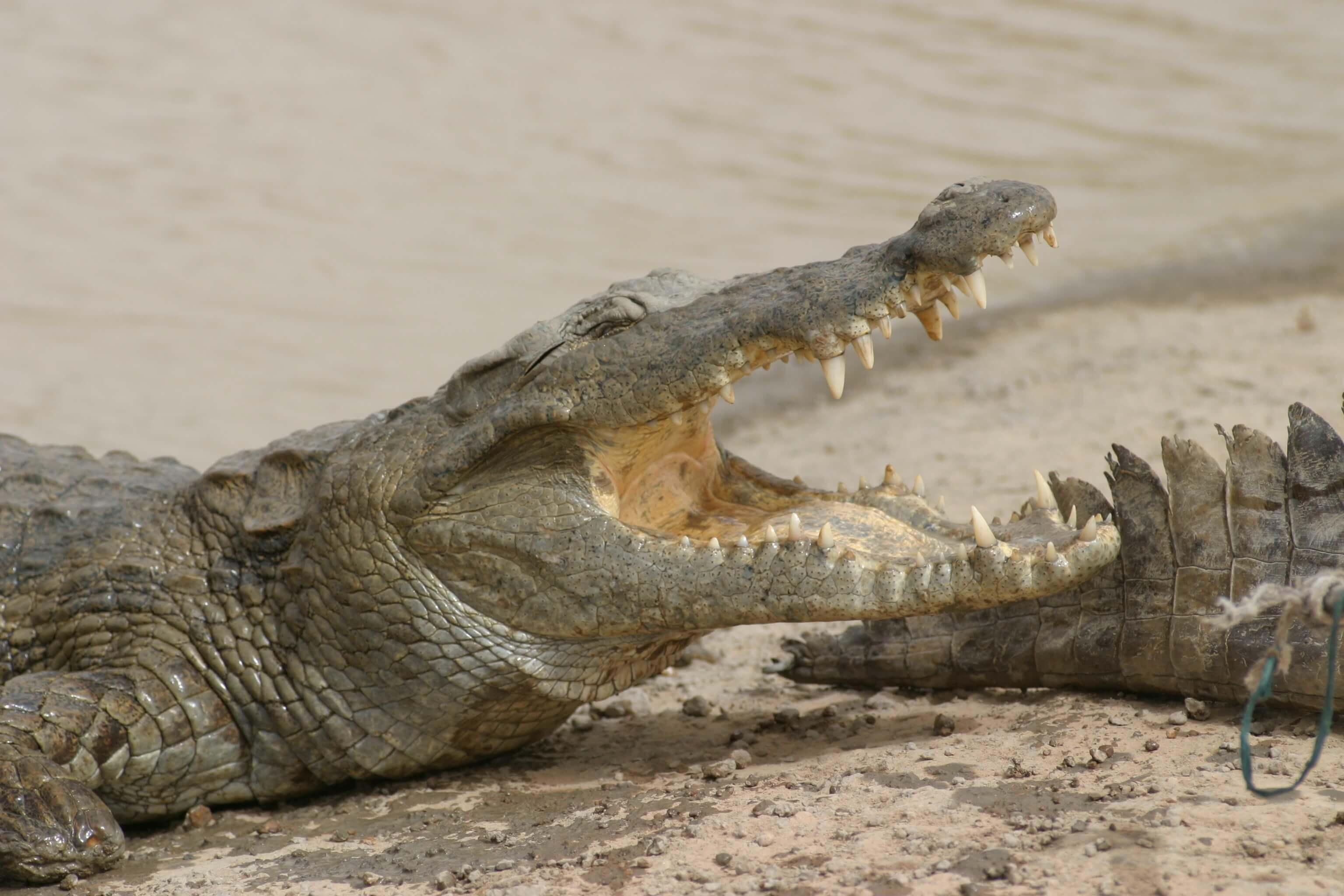 Bazoulé Sacred Crocodile Pond