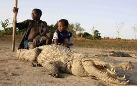 Ponds with sacred crocodiles of Sabou